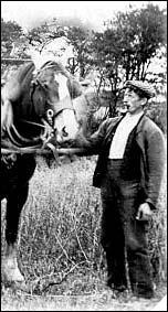 horseword